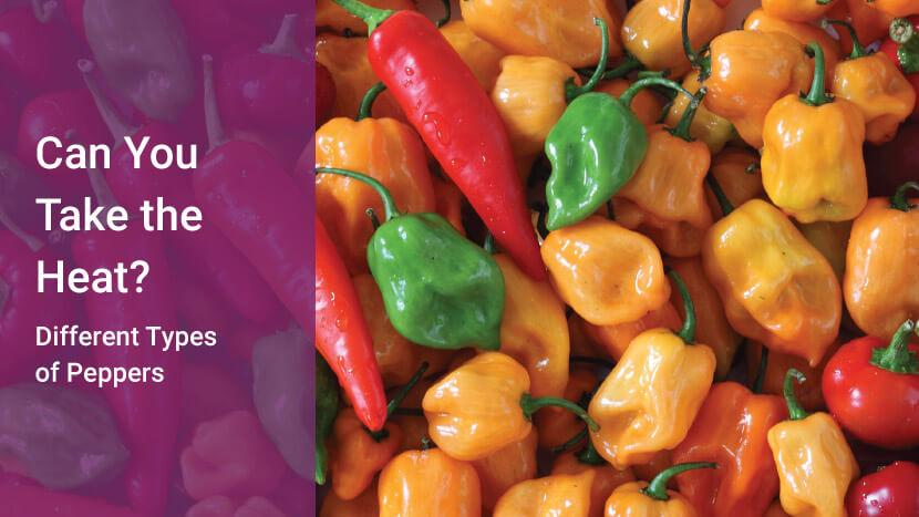 Can You Take the Heat? Different Types of Peppers