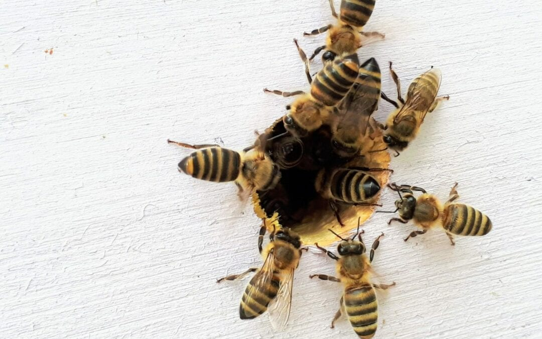 New Research May Save Colonies of Bees